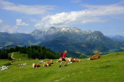 Traunwand – Gamsfeld – Angerkaralm, hiking route, alps, mountains, nature, cows, Dachstein West, Dachstein, summer, holidays, hiking, Salzburg, Austria